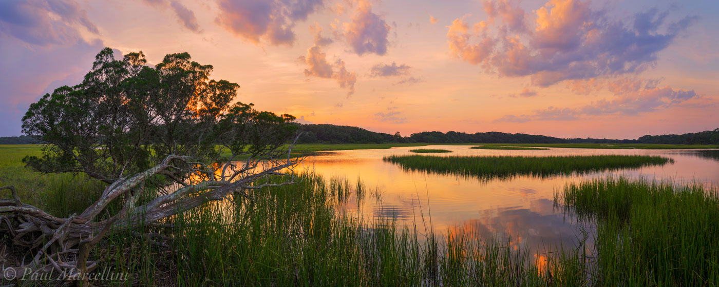 cedar, sunset, marsh, little talbot state park, florida, nature, photography, photo