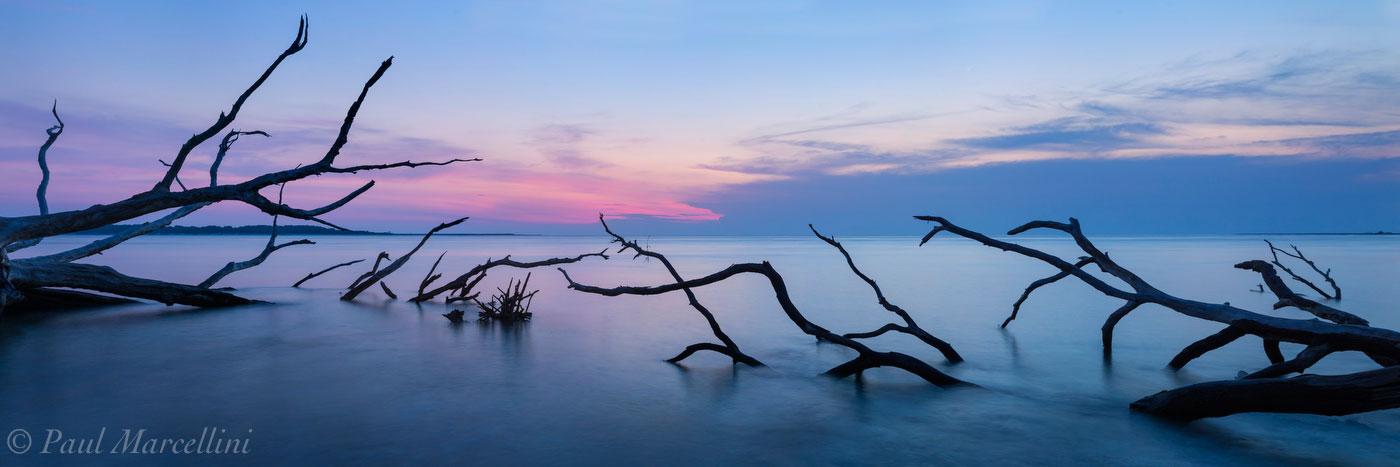 oaks, sea, Big Talbot State Park, Florida, big talbot, nature, photography, photo