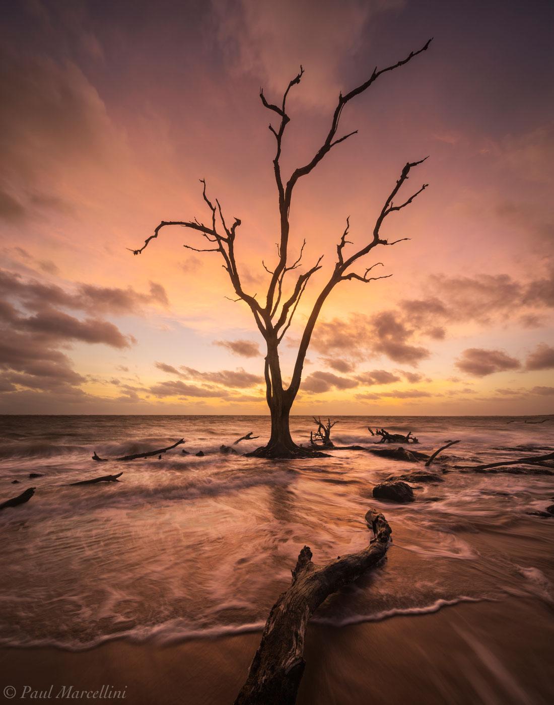 Big Talbot State Park, Florida, boneyard beach, big talbot, nature, photography, photo