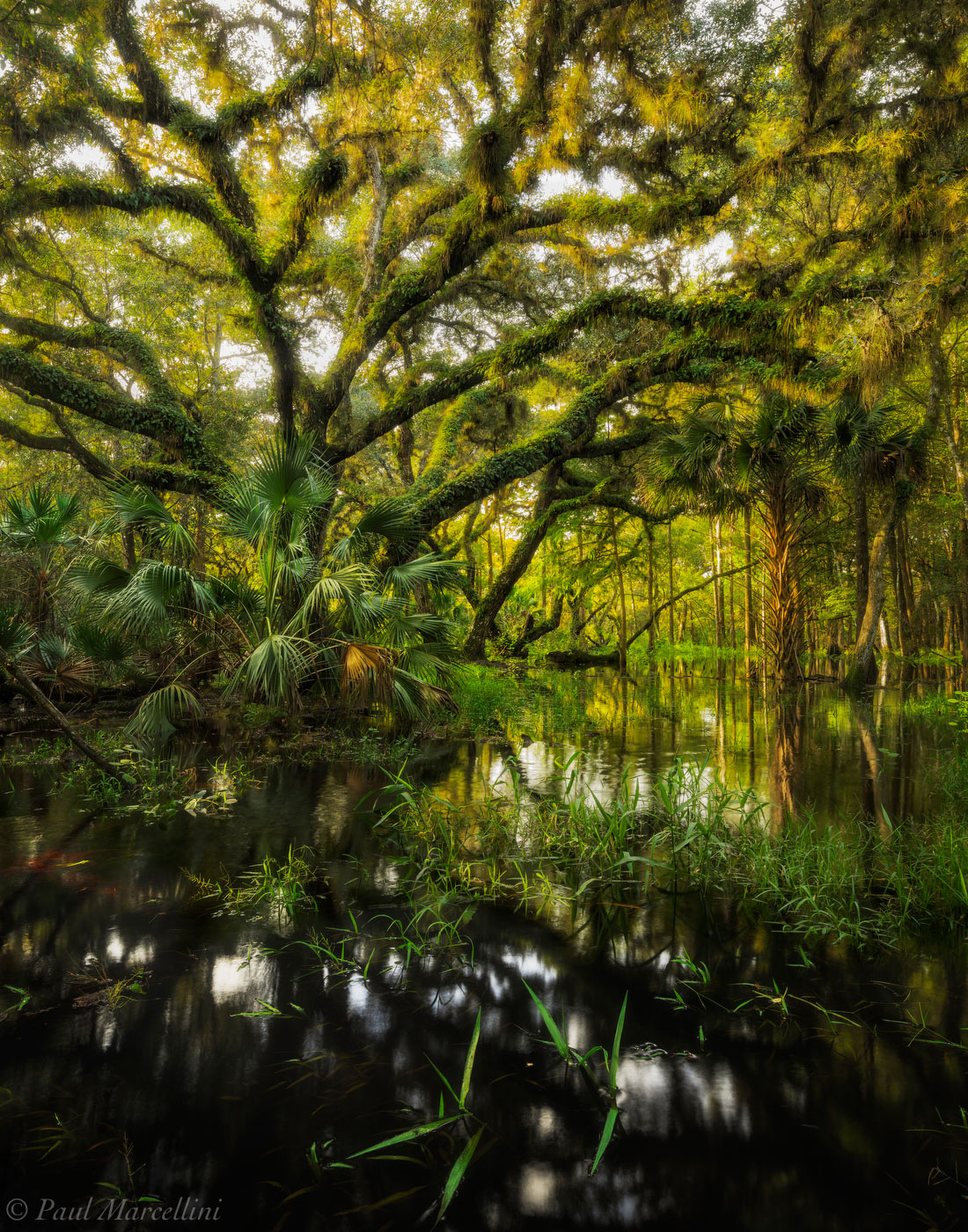 fisheating creek, oak, flood, florida, nature, photography, photo
