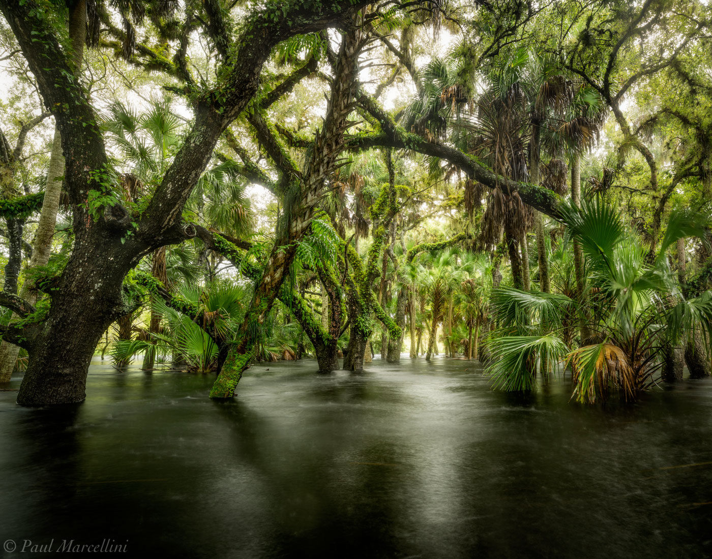 Myakka River State Park, Florida, hydric hammock, nature, photography, photo