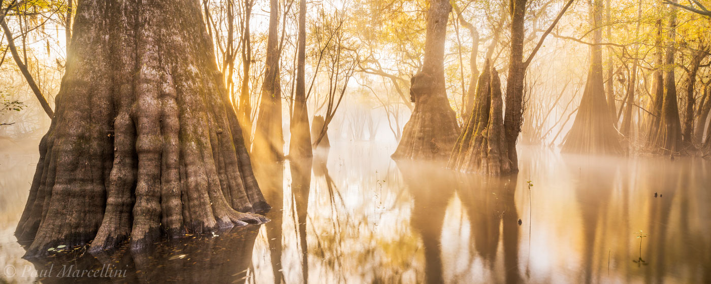fog, suwannee valley, florida, , nature, photography, photo