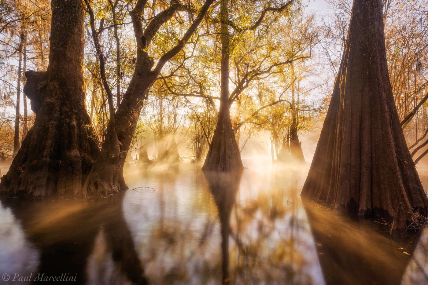 sunrise, fog, suwannee valley, florida, backwaters, nature, photography, photo