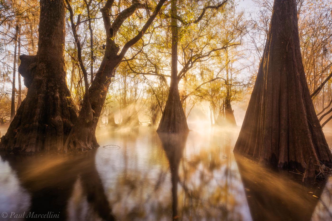 sunrise, fog, suwannee valley, florida, backwaters, nature, photography, photo