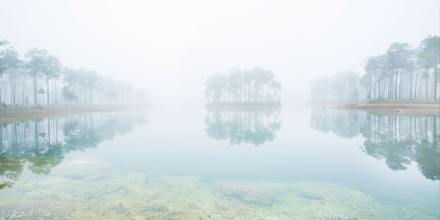 everglades national park, florida, fog, pinelands, nature, photography, florida national parks, photo