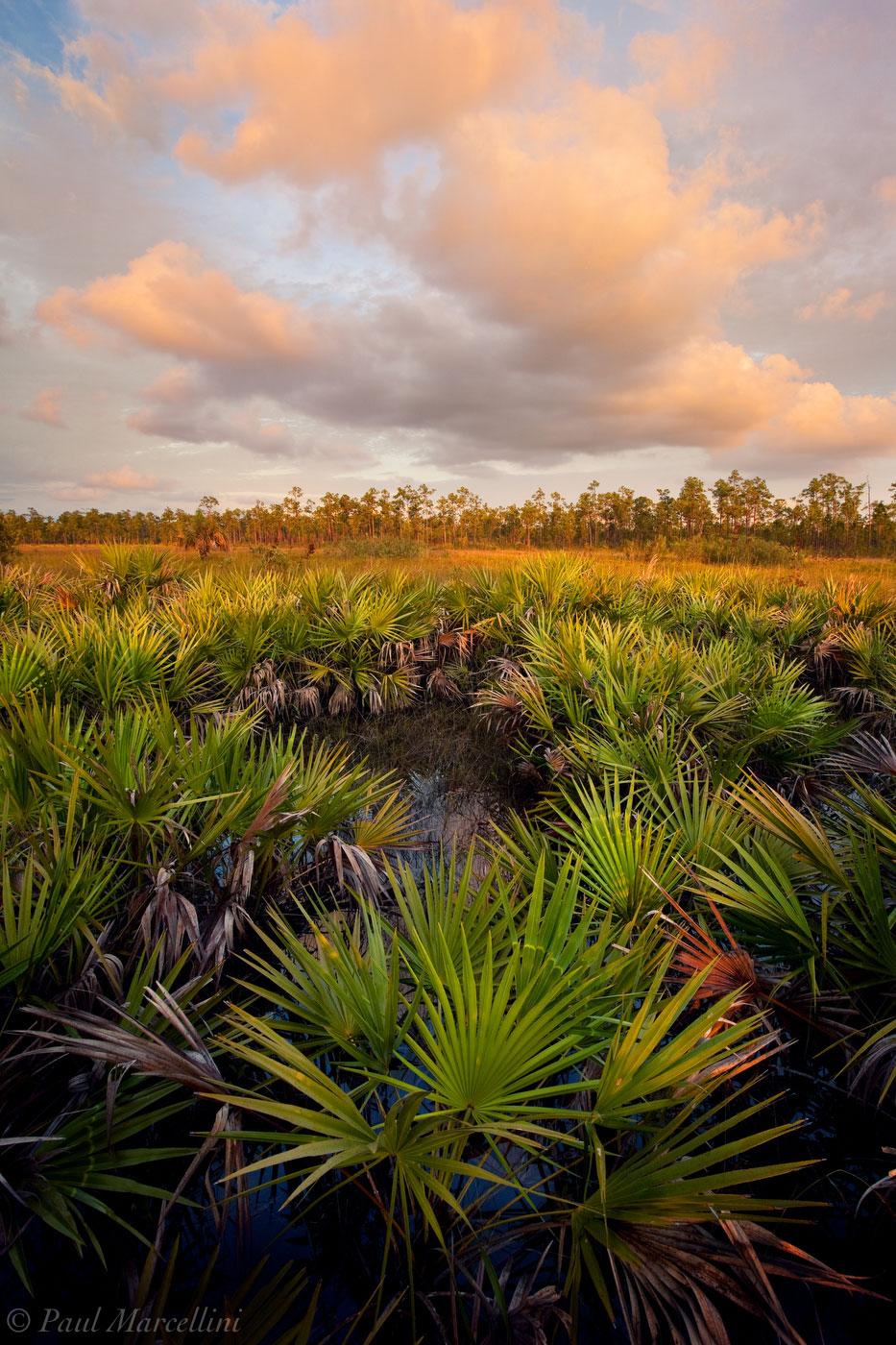 everglades, palmetto, serenoa repens, sunset, Florida, nature, photography, florida national parks, photo