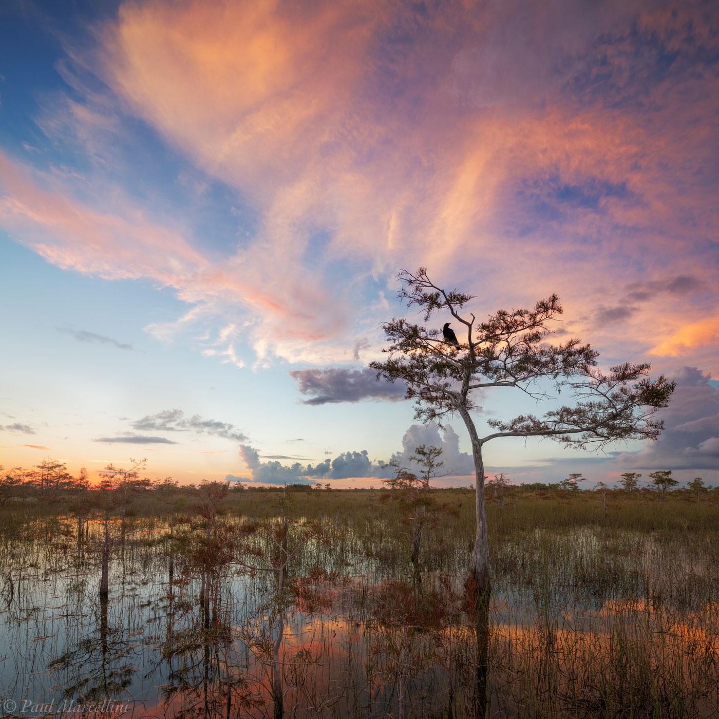 crow, everglades national park, florida, sunset, nature, photography, florida national parks, photo