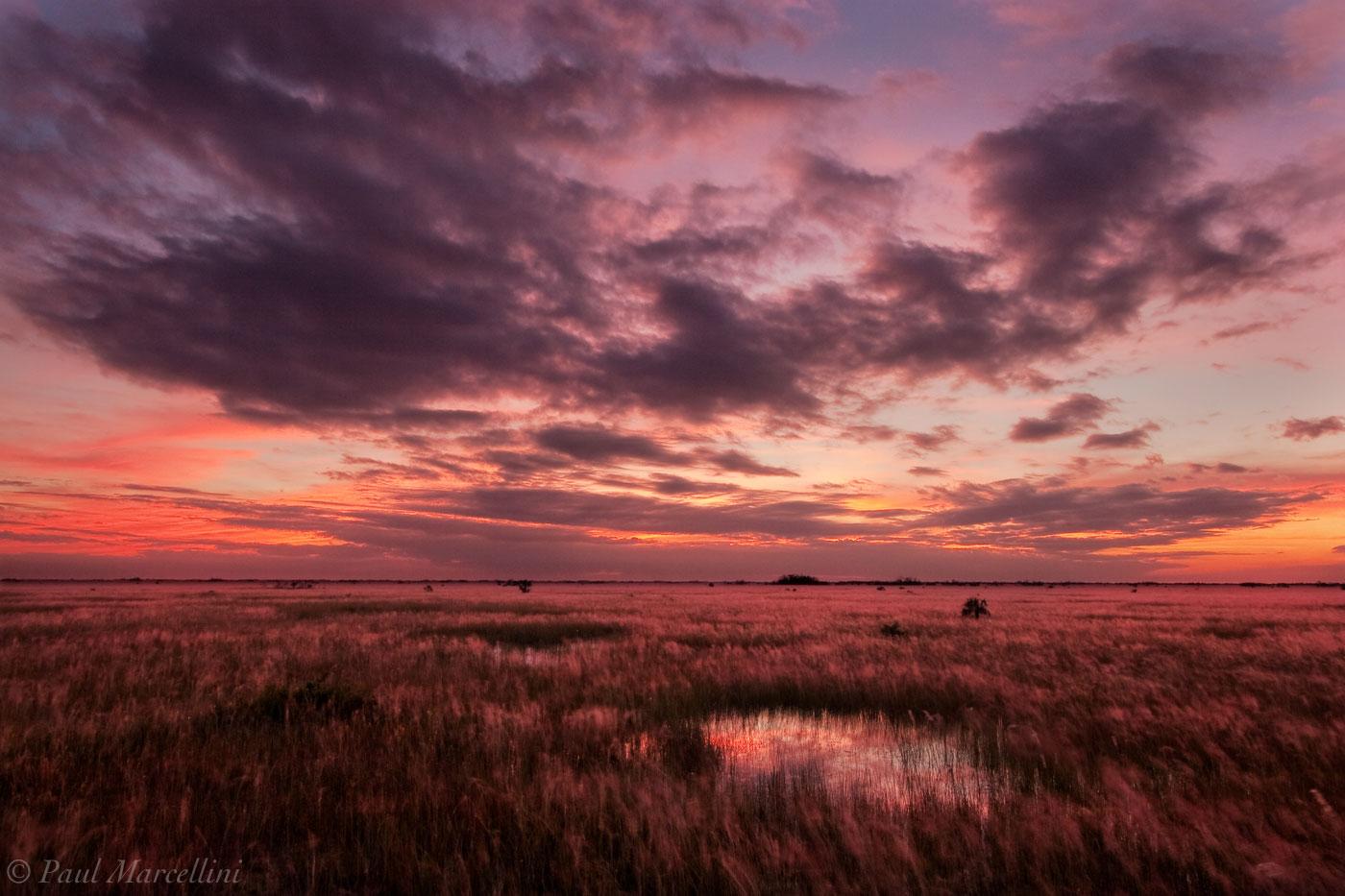 muhly grass, muhlenbergia capillaris, everglades, Florida, nature, photography, florida national parks, photo