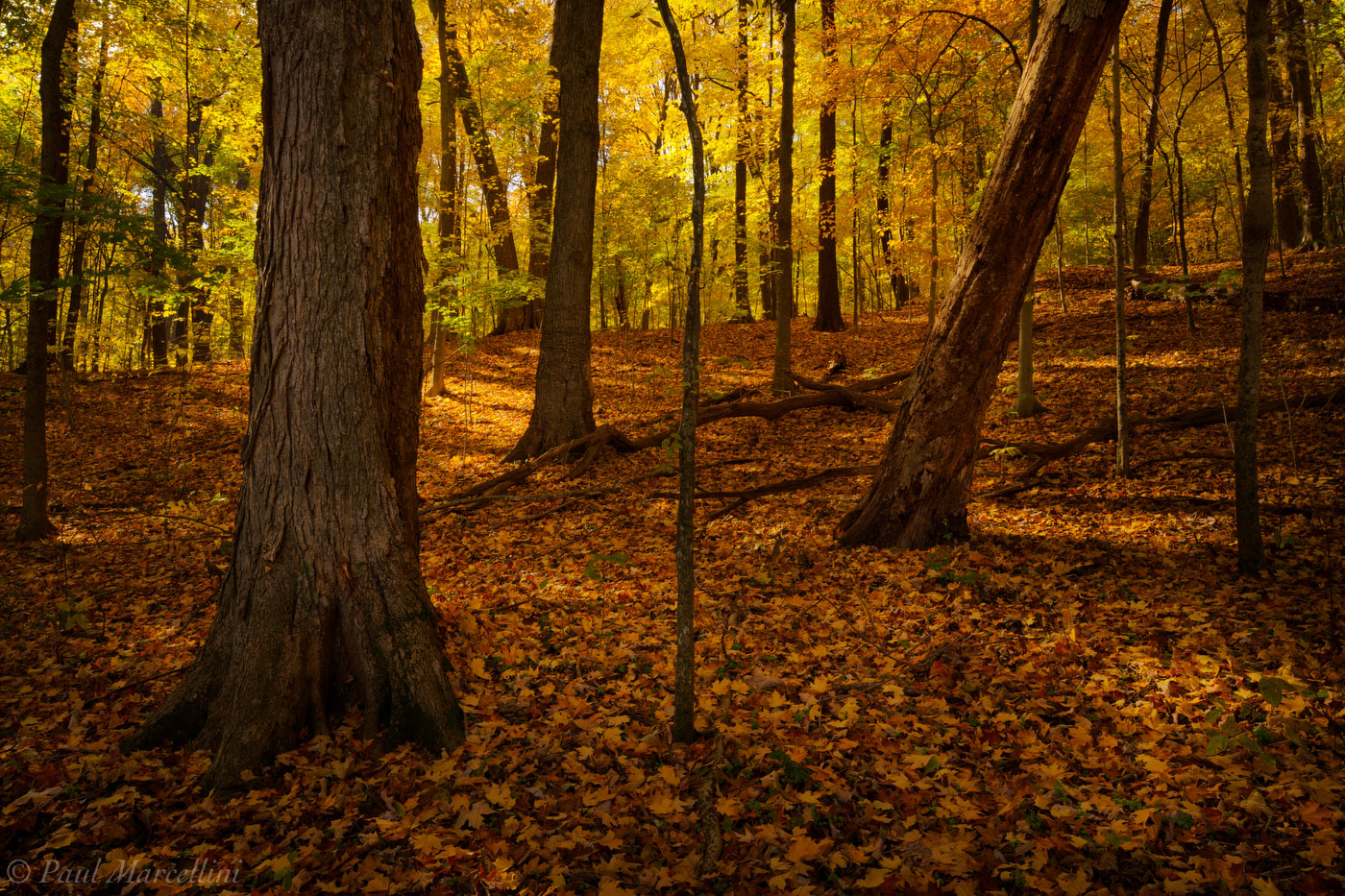 Radnor Lake State Park, Nashville, Tennessee, fall, morning, photo