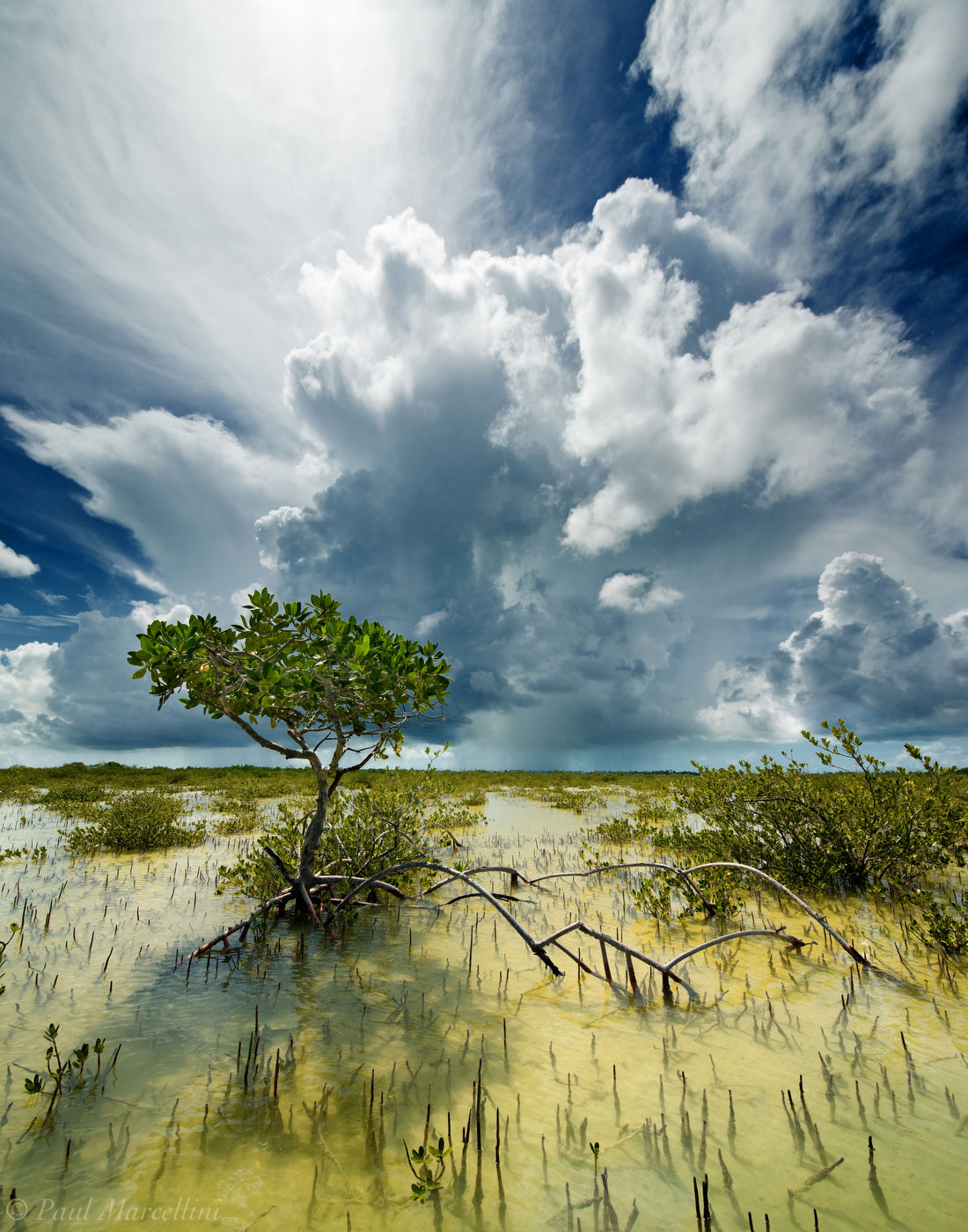 Big Pine Key, Florida Keys, Florida, key deer refuge, mangrove, keys, storm, south florida, nature, photography, photo