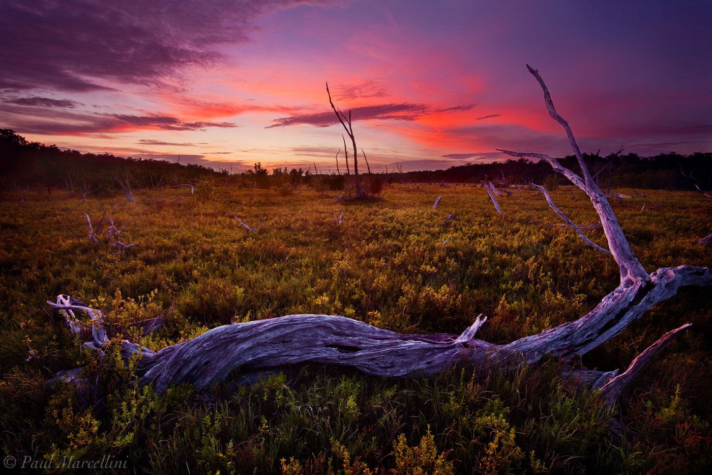 salt marsh, everglades, florida, nature, photography, florida national parks, photo
