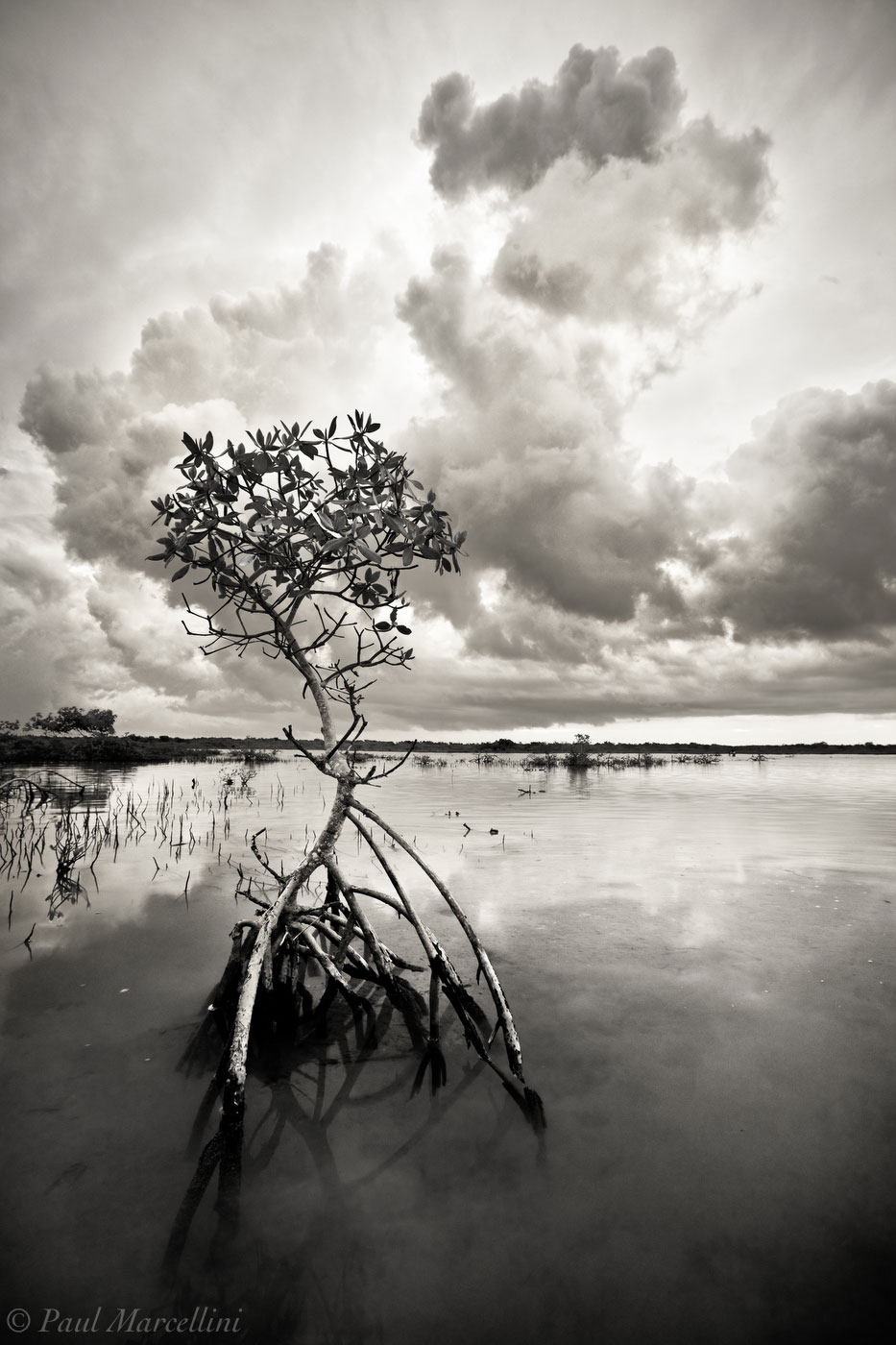storm, mangrove, big pine key, florida keys, florida, keys, south florida, nature, photography, photo