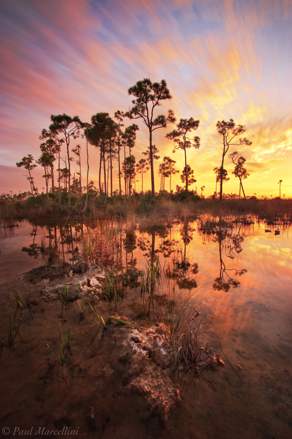 wet season, everglades, pines, sunset, Florida, nature, photography, florida national parks, photo