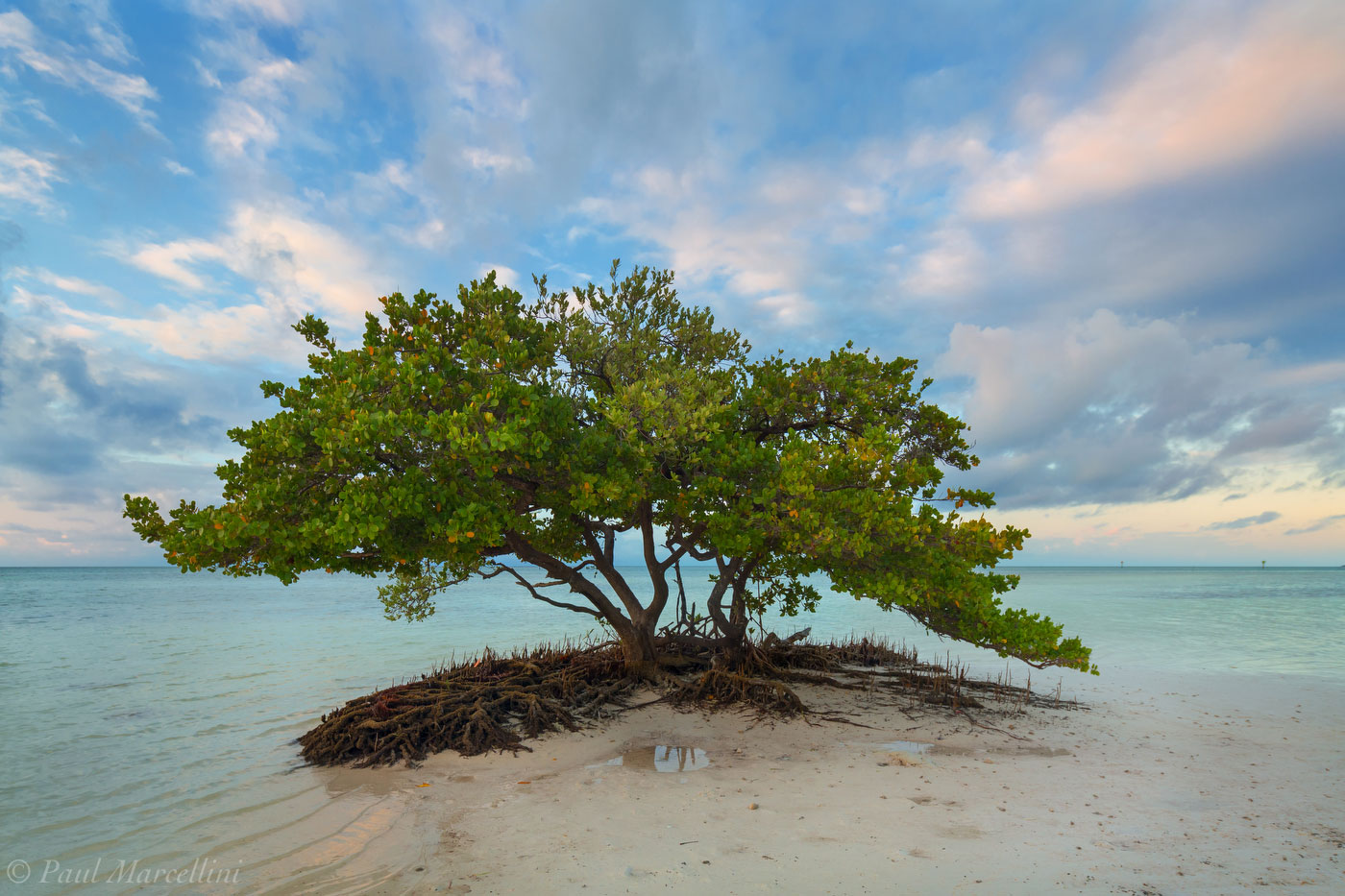 sunrise, mangrove, Islamorada, Florida Keys, FL, keys, florida, south florida, nature, photography, photo