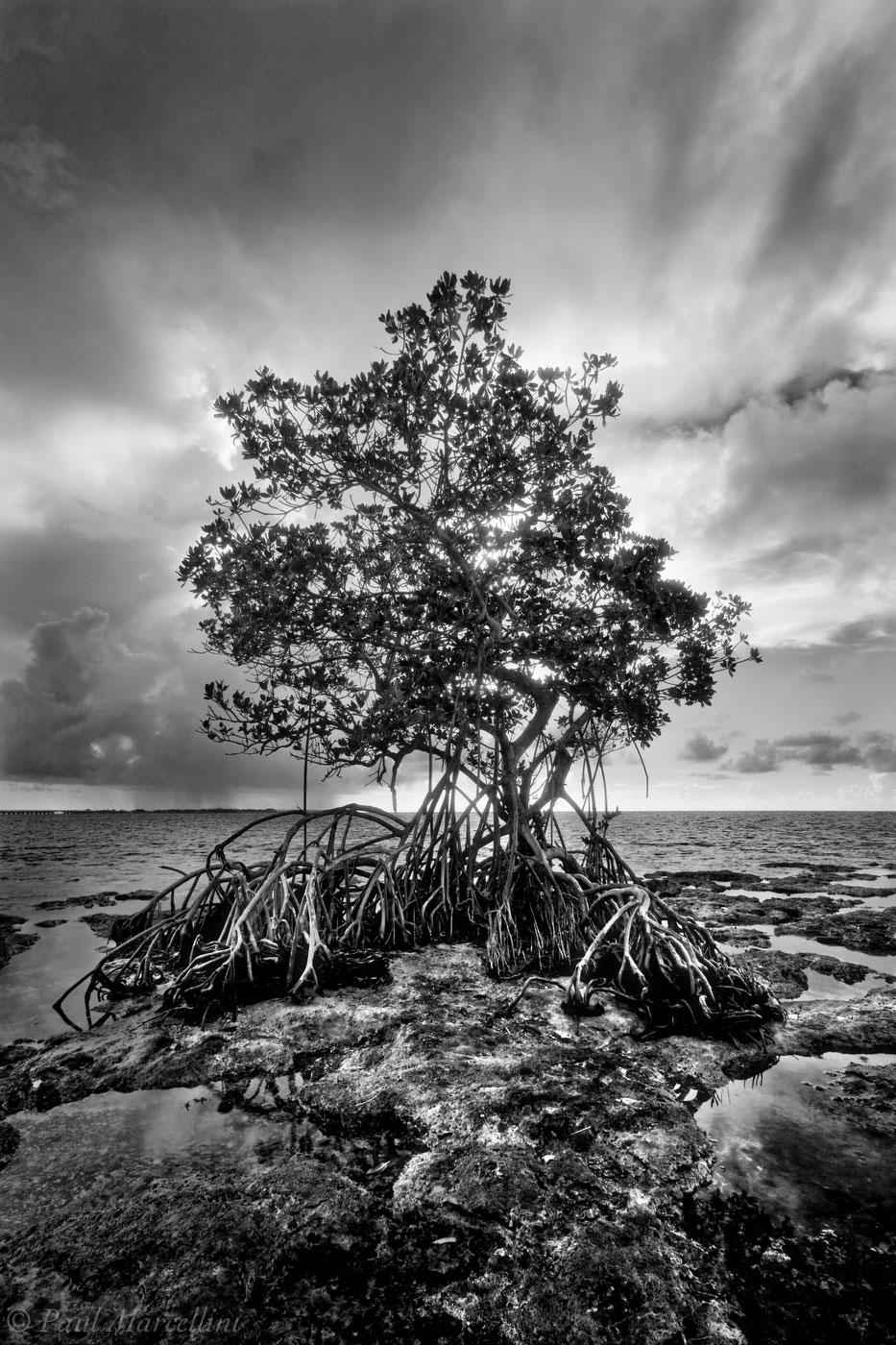 storm, big pine key, florida, mangrove, keys, florida keys, south florida, nature, photography, , photo