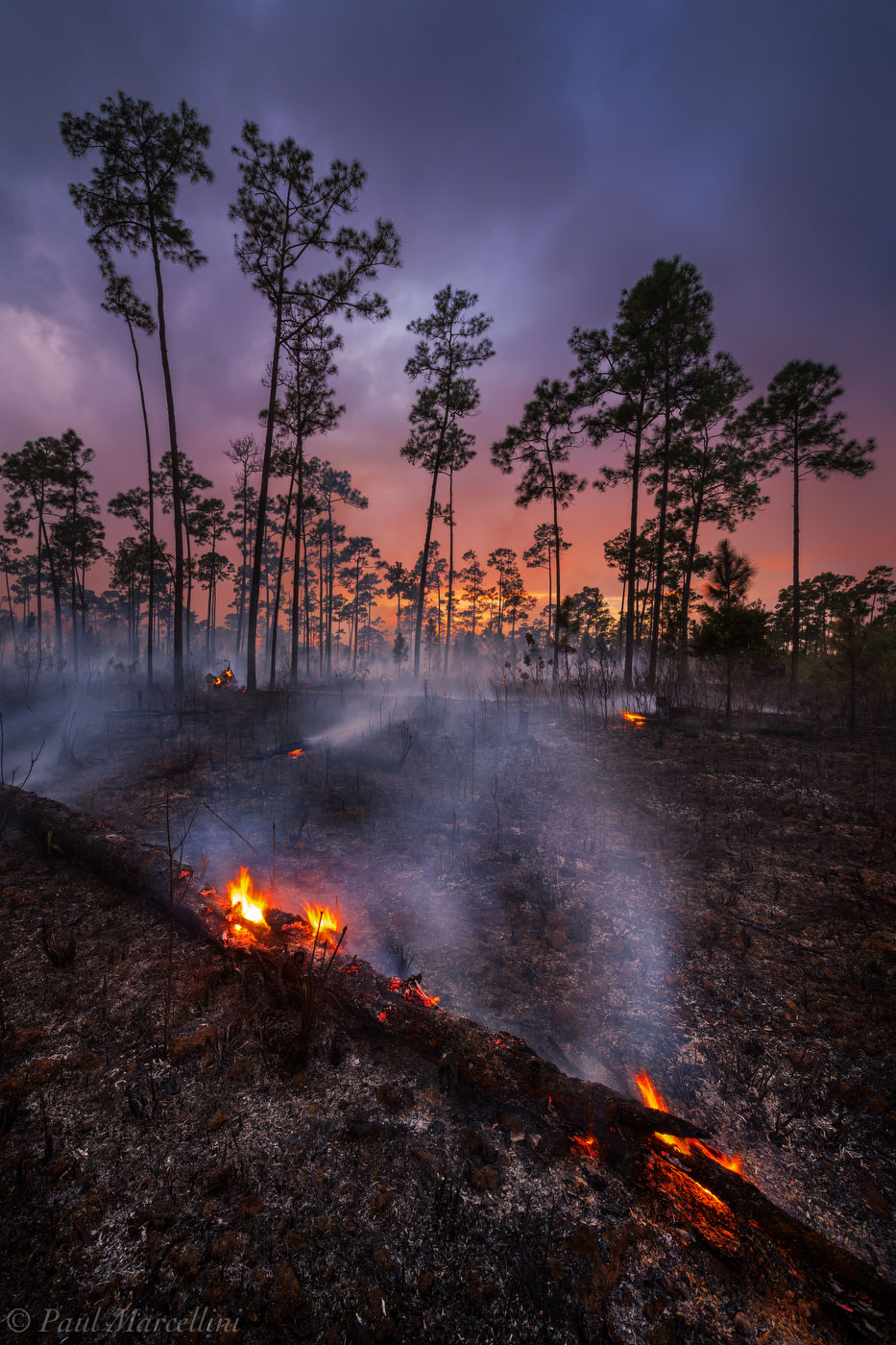 everglades, rocky pinelands, fire, florida, globally imperiled, , nature, photography, florida national parks, photo