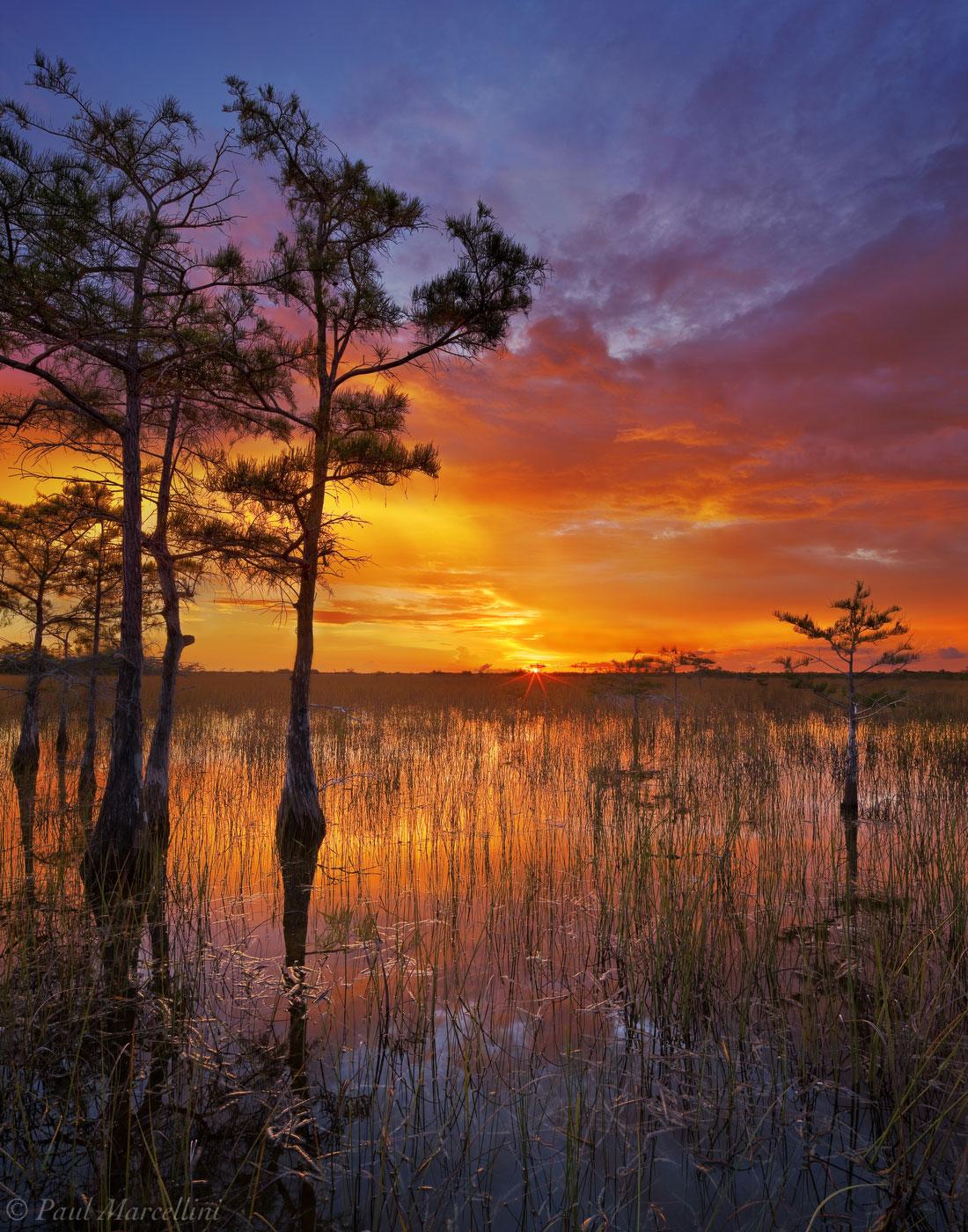 Everglades National Park, Florida, cypress, sunset, nature, photography, florida national parks, photo