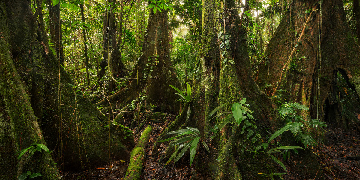 belize, jungle, swamp, kaway, photo