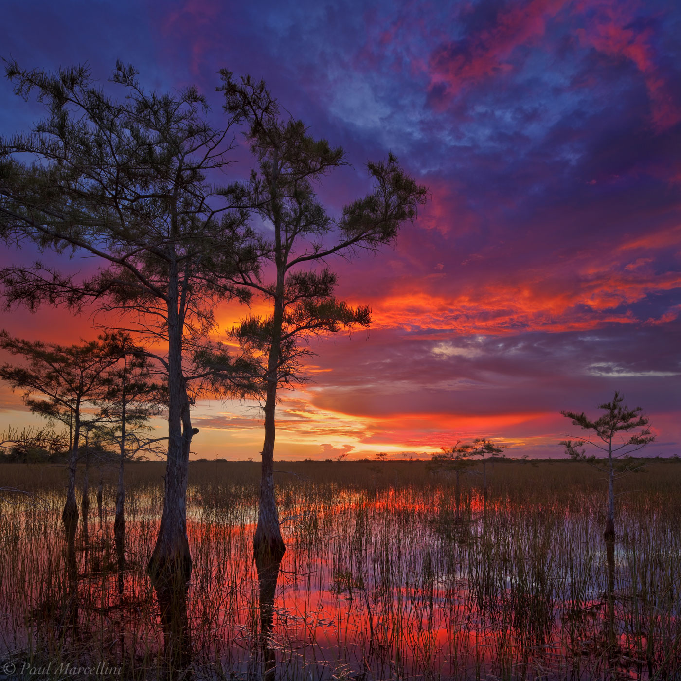 Pahayokee, Everglades National Park, Florida, cypress, river of grass, nature, photography, florida national parks