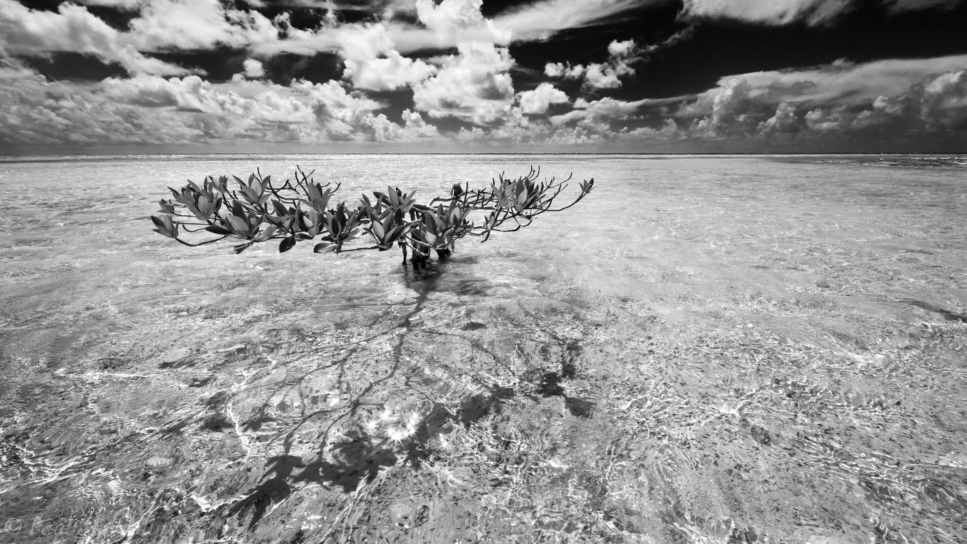 Florida Bay, Florida, red mangrove, summer, keys, florida keys, south florida, nature, photography, photo