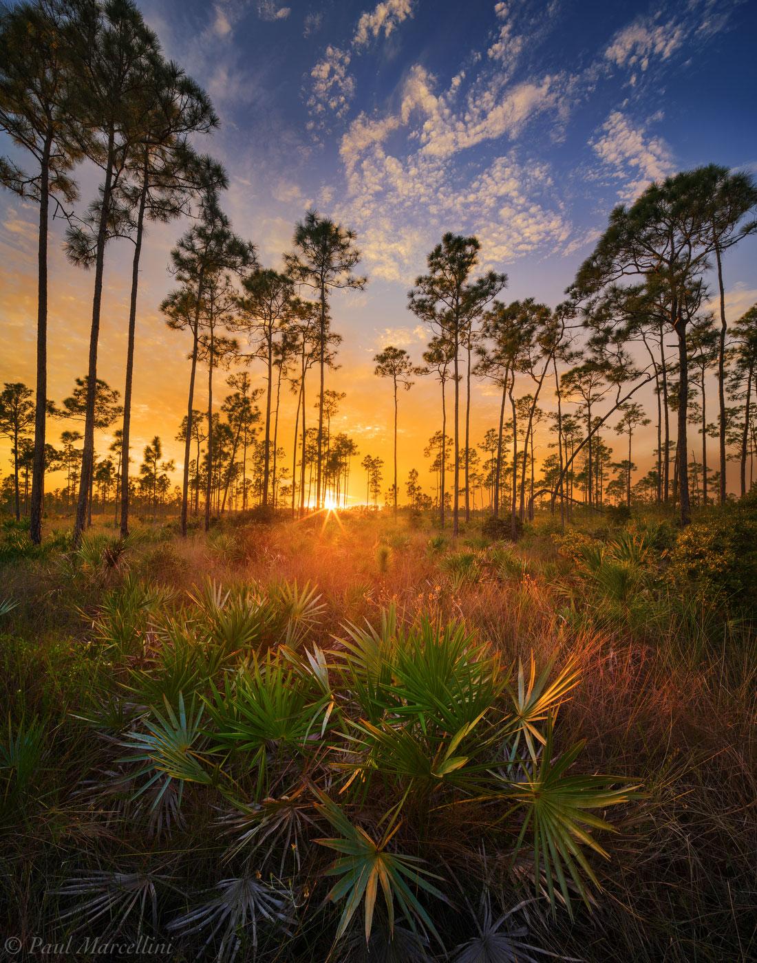 pineland, grasses, everglades, florida, nature, photography, florida national parks, photo