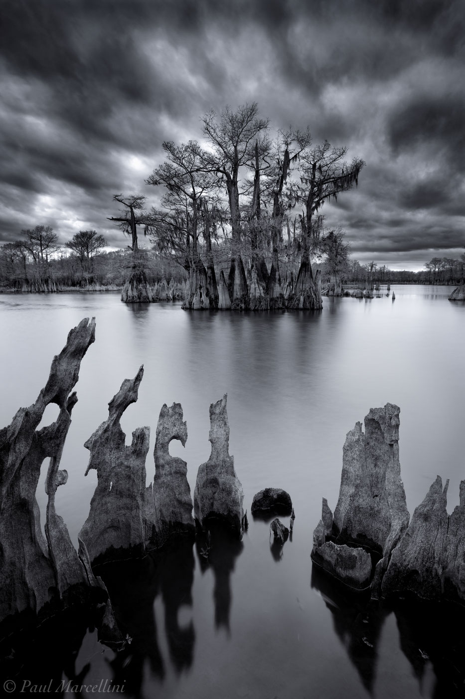chipola river, dead lakes, florida, cypress, north florida, nature, photography, photo