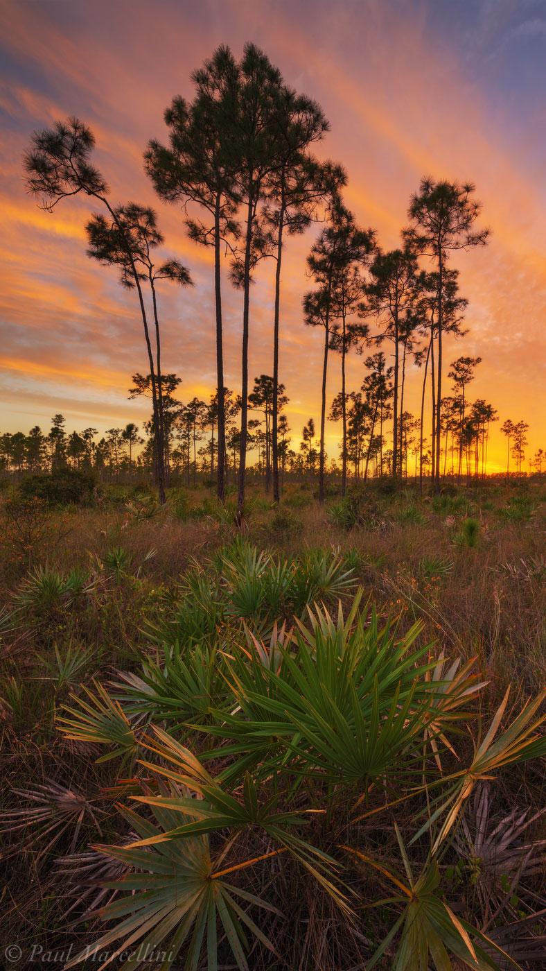 Everglades, sunset, slash pine, palmetto, rocky pinelands, florida, nature, photography, florida national parks, photo