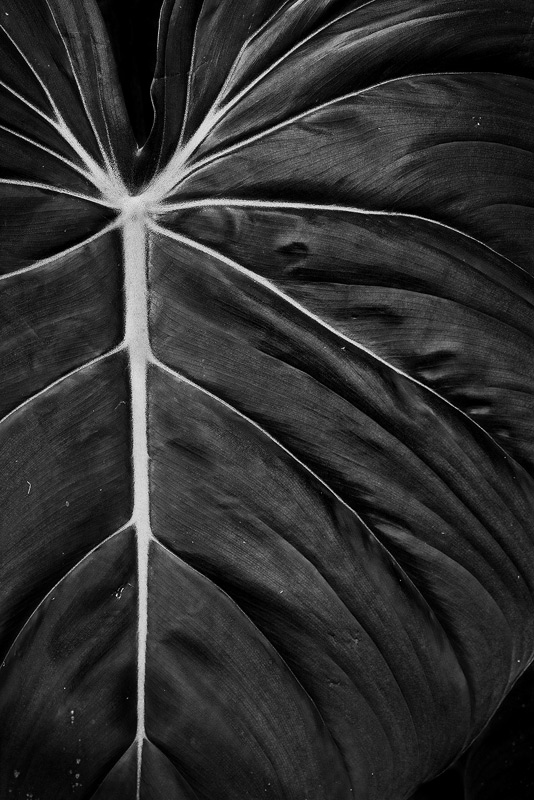 bw, monochrome, plants, flora, photo