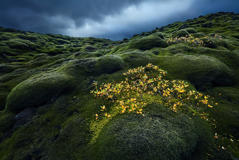 iceland, europe, nordic, laki, moss, stormy, photo