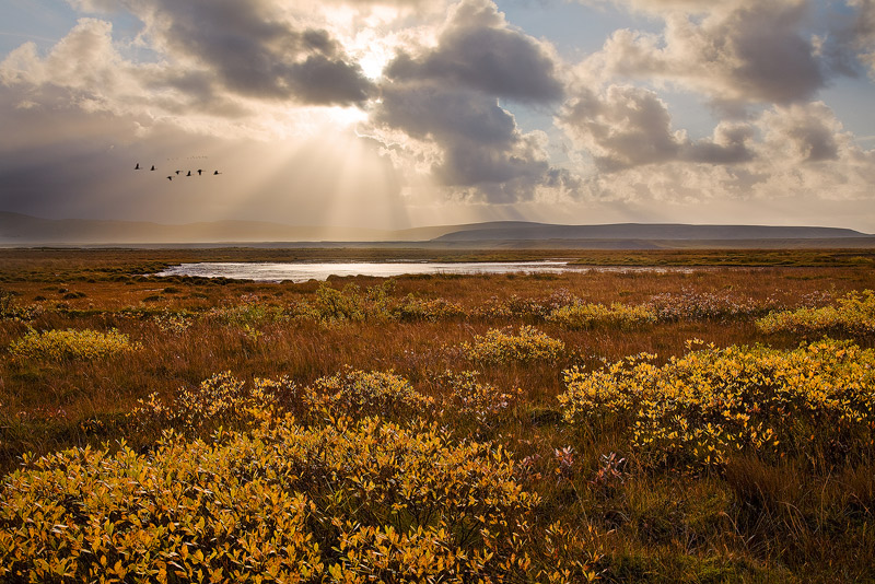 iceland, whooper swans, fall, sun, crepuscular rays, photo