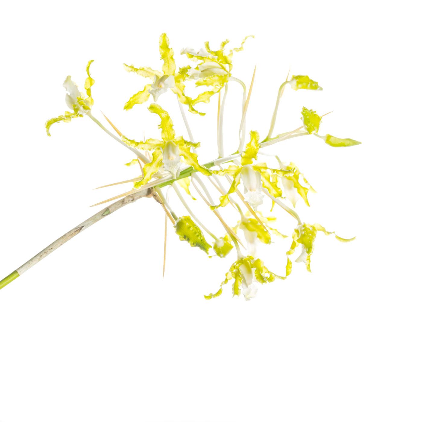 flower, tropical, flora, , photo
