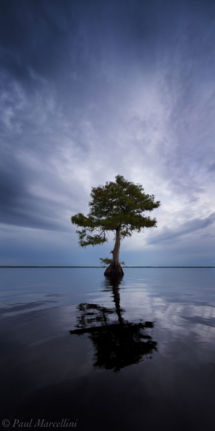 Blue Cypress Lake, Indian River County, Florida, panorama, blue, south florida, nature, photography, photo