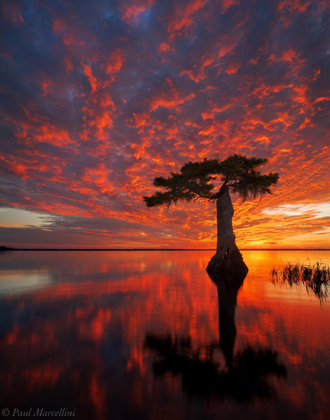 cypress, Blue Cypress Lake, Indian River County, FL, sunrise, florida, south florida, nature, photography, photo