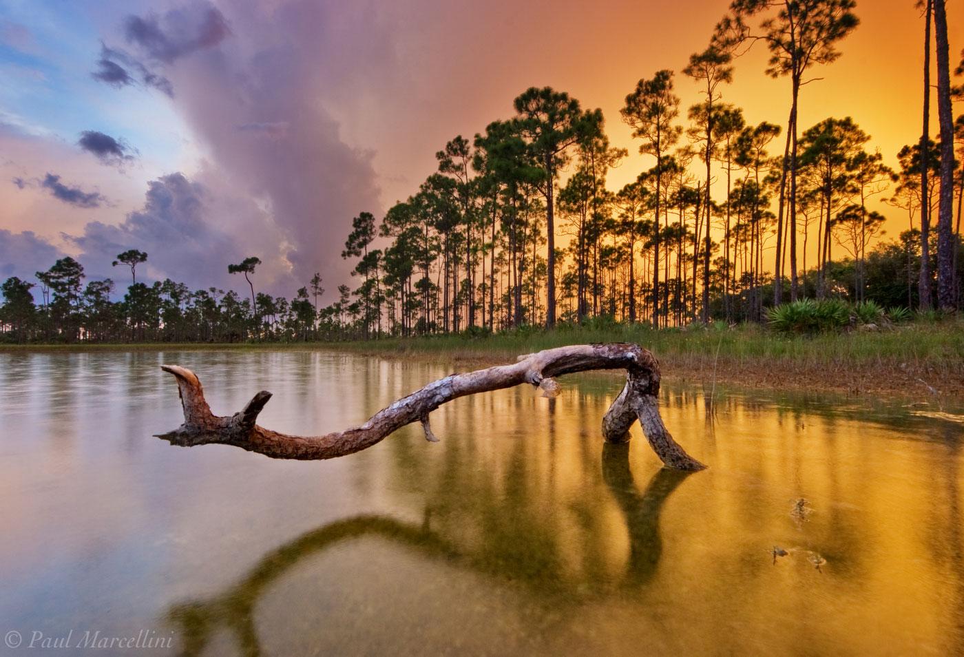 pine, sunset, storm, everglades, Florida, limited edition, nature, photography, florida national parks, photo