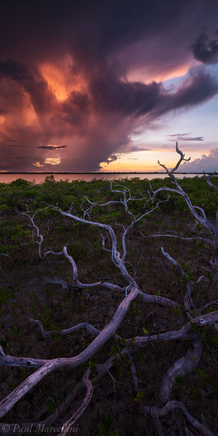 Little Torch Key, Florida Keys, Florida, branches, keys, south florida, nature, photography, photo