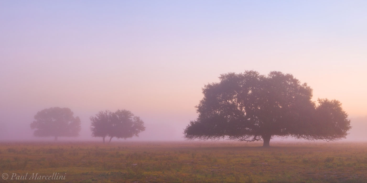 morning, fog, oaks, venus, florida, south florida, nature, photography, photo