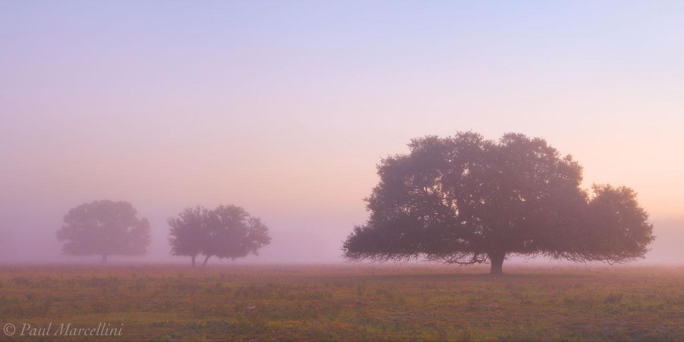 morning, fog, oaks, venus, florida, south florida, nature, photography, photo