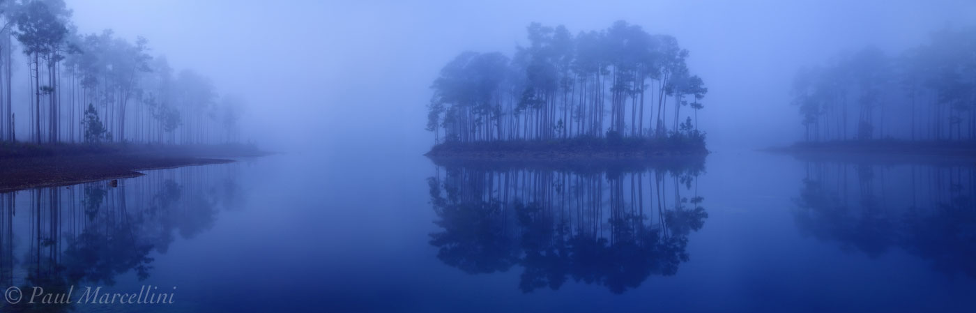 everglades, sunrise, pines, foggy, Florida, nature, photography, florida national parks, photo