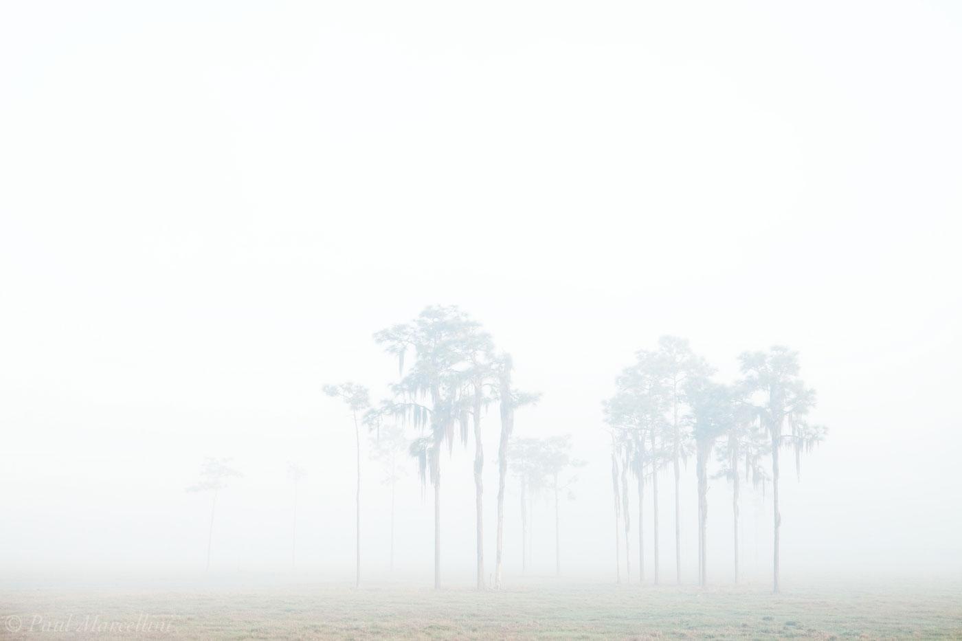 fog, pines, field, florida, south florida, nature, photography,, photo