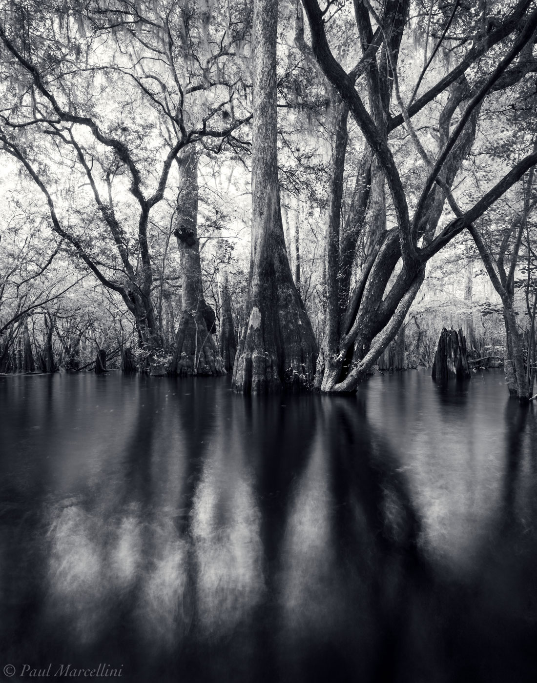 Black and white florida florida florida landscape photography by paul marcellini