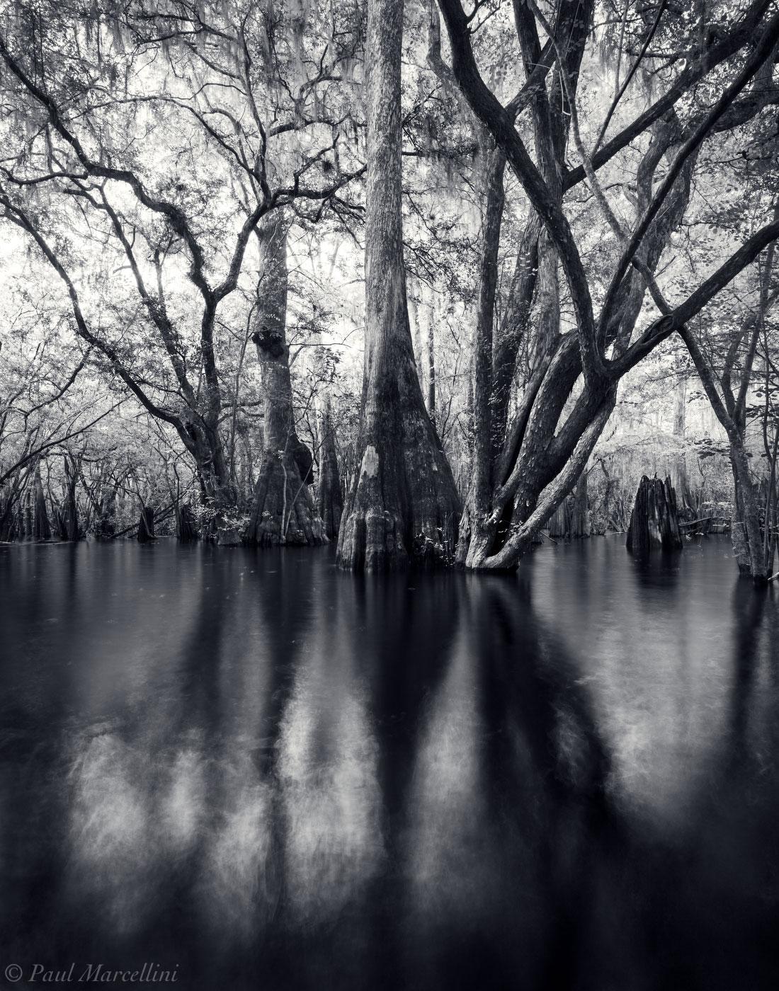 Suwannee River Valley, Florida, trees, backwaters, north florida, nature, photography, photo