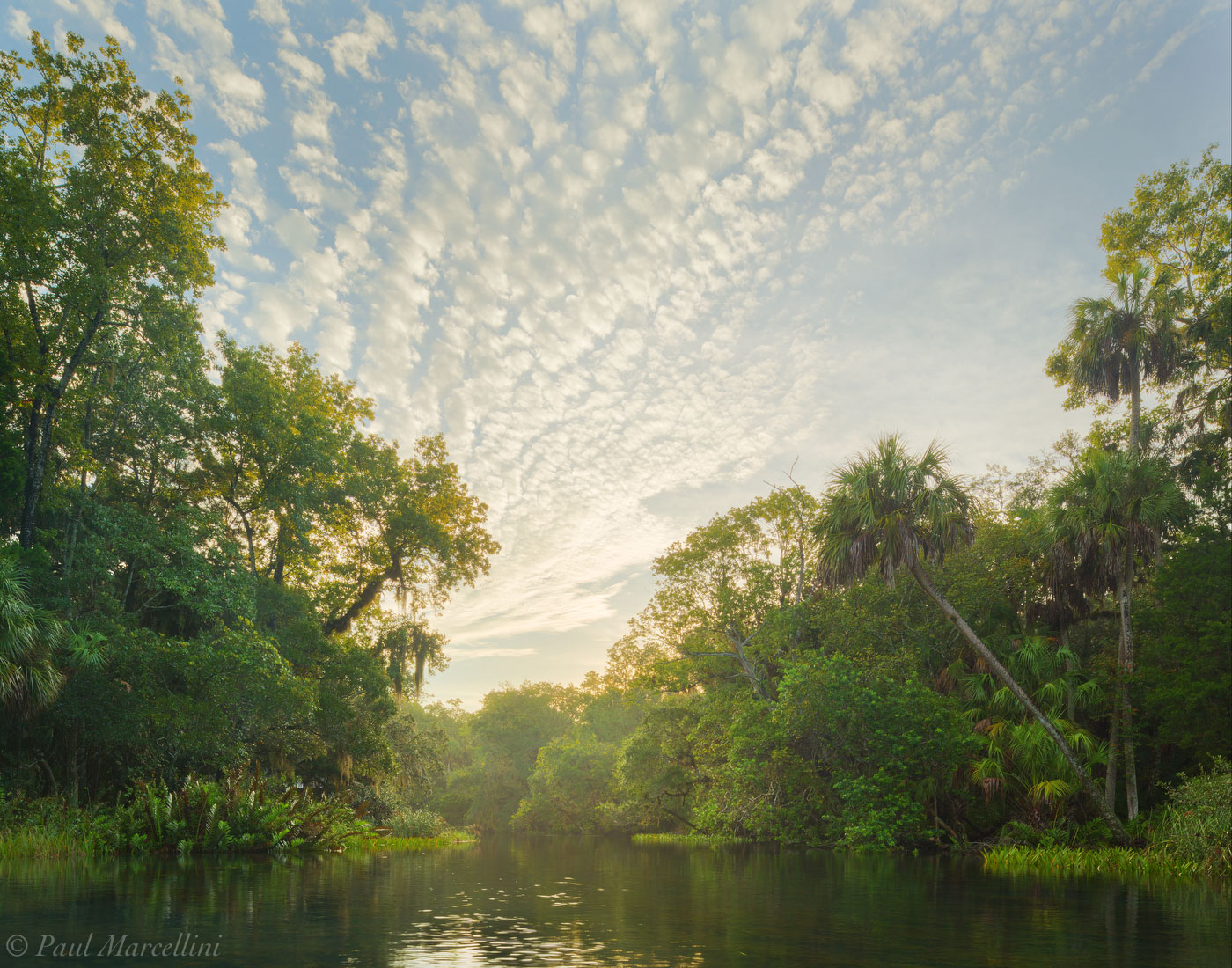 Search Rivers Florida Landscape Photography By Paul Marcellini - Rivers in florida