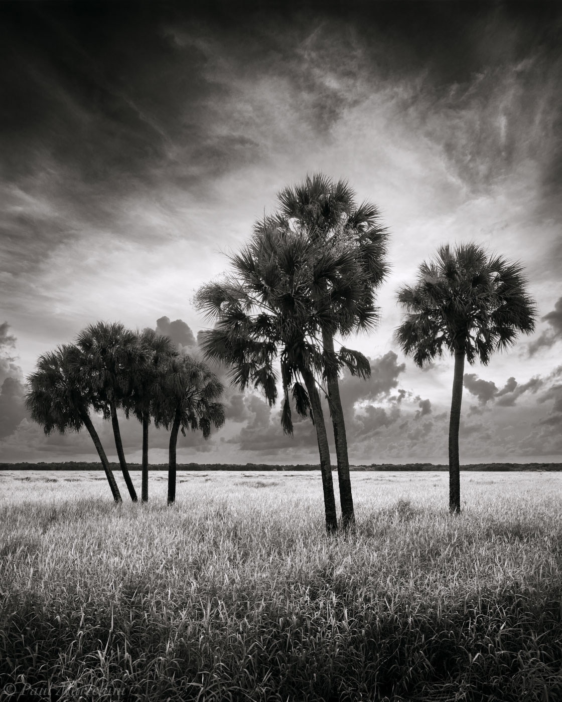 Myakka River State Park, Florida, sabal palms, south florida, nature, photography, photo