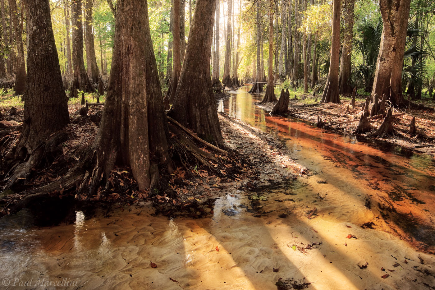 fisheating, creek, tannin, fisheating creek, Fisheating Creek Wildlife Management Area, florida, south florida, nature, photography, , photo