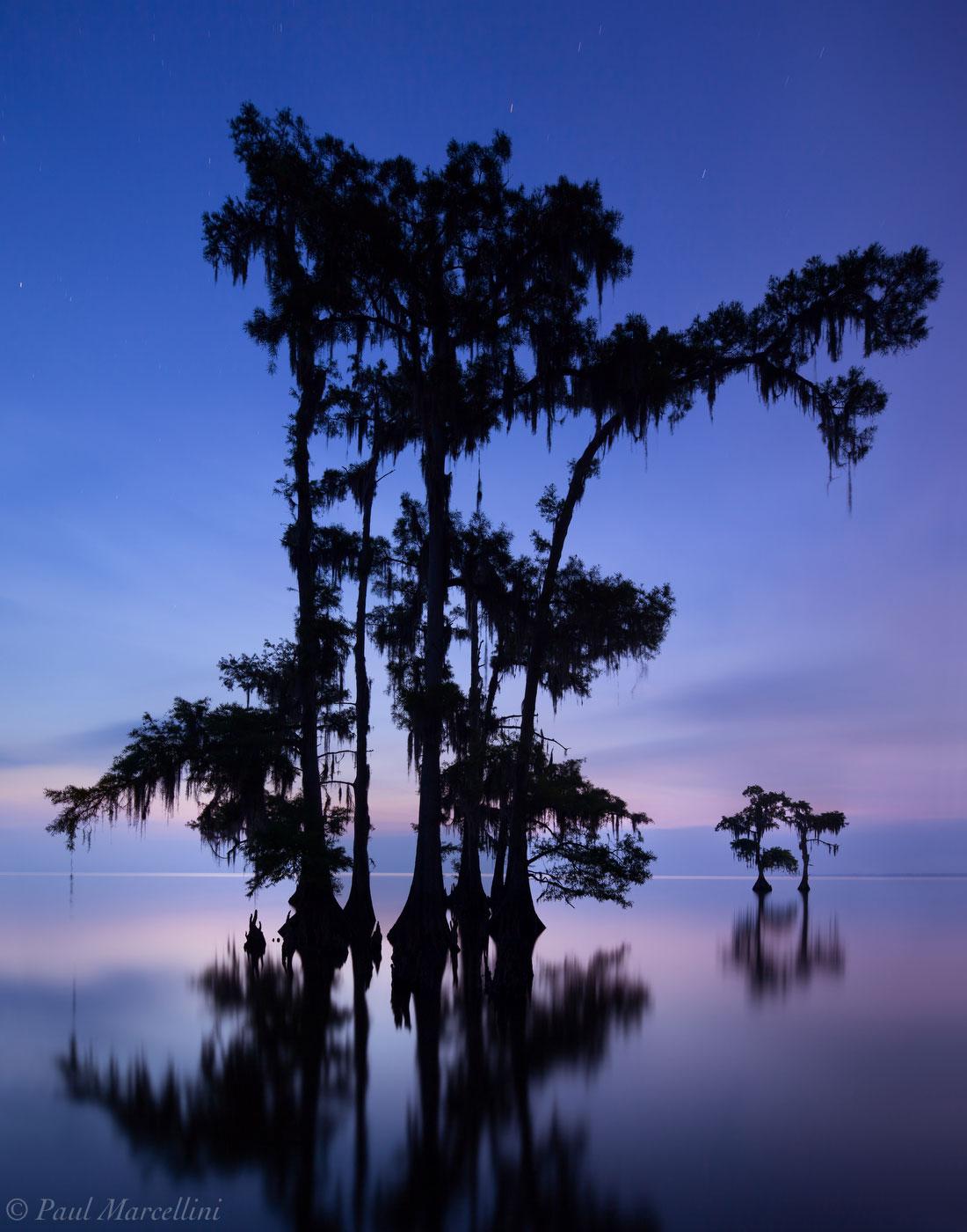 louisiana, cypress, lake maurepas, photo