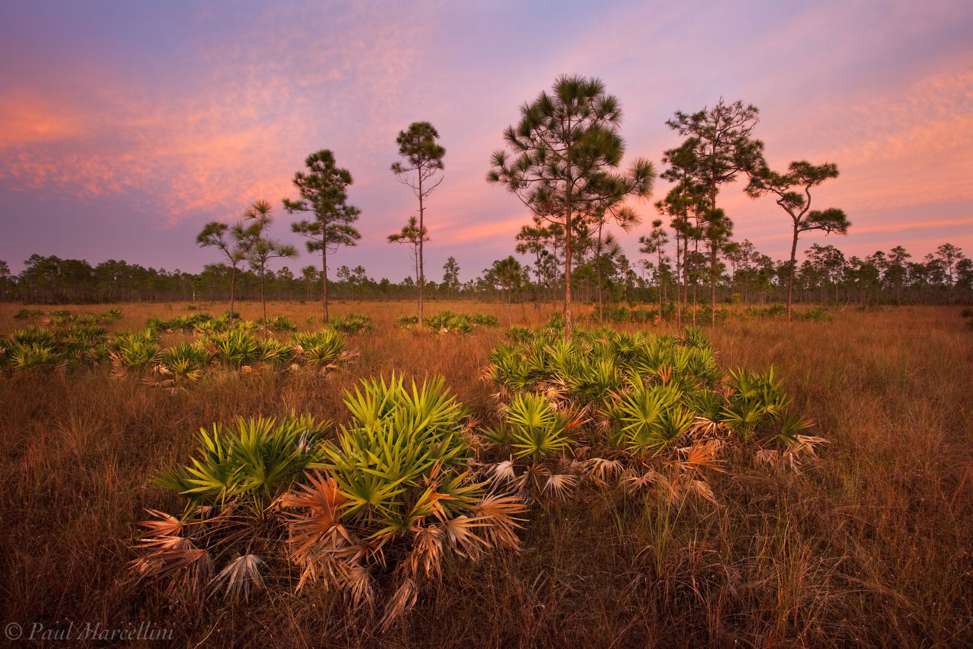 sunset, everglades, rocky pinelands, Florida, nature, photography, florida national parks, photo