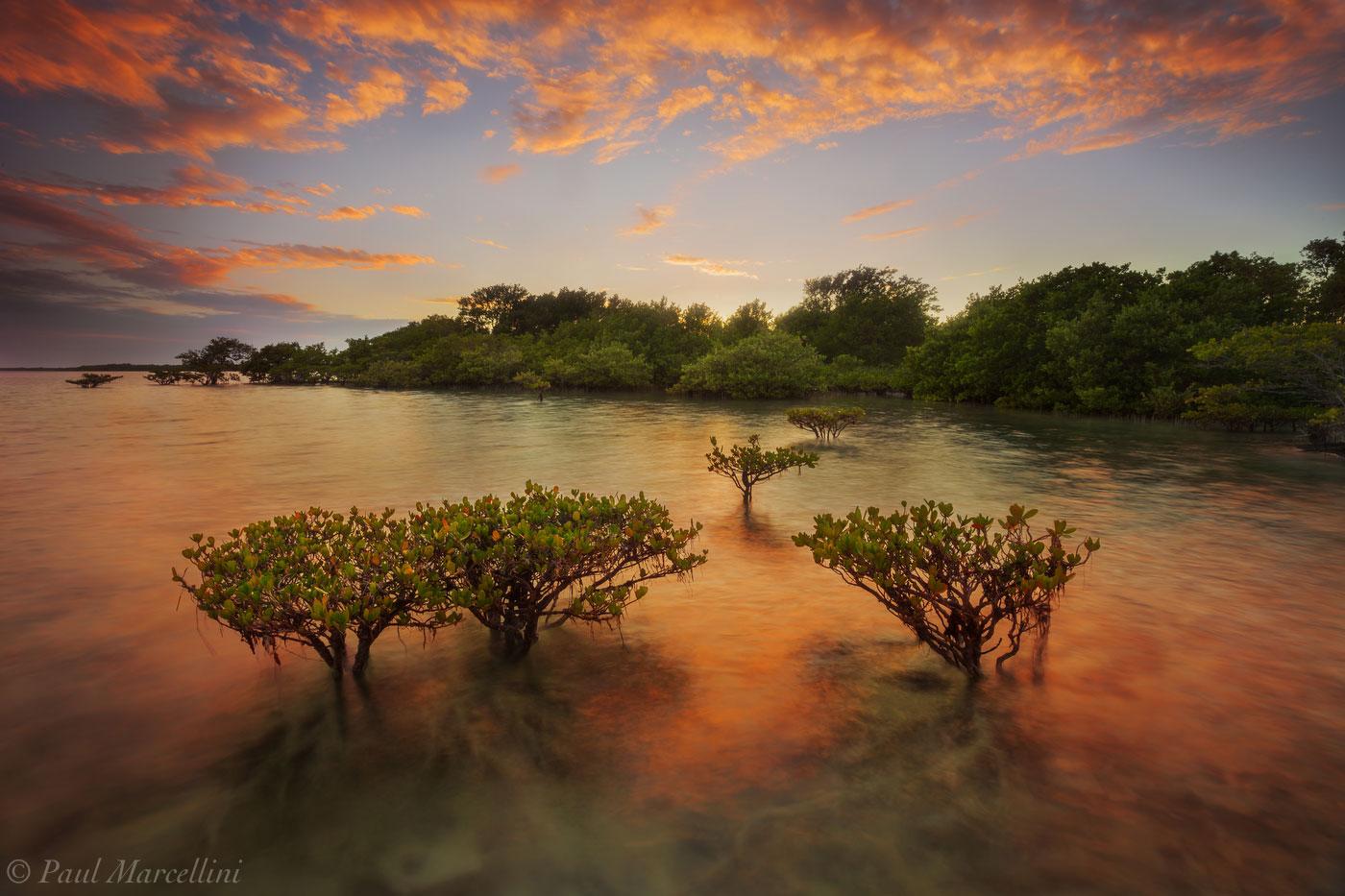 biscayne national park, mangroves, sunset, florida, nature, photography, photo