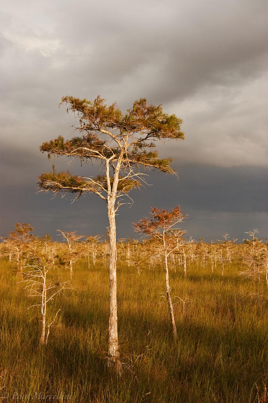 dwarf cypress, everglades, storm, Florida, nature, photography, florida national parks, photo
