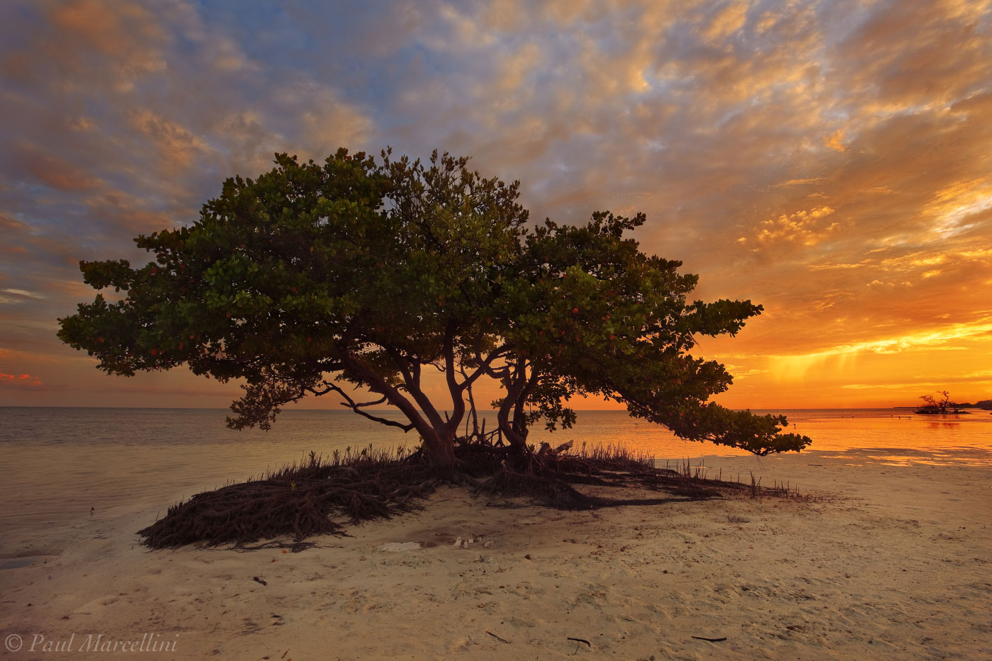 mangrove, anne's beach, islamorada, florida, keys, florida keys, south florida, nature, photography, photo
