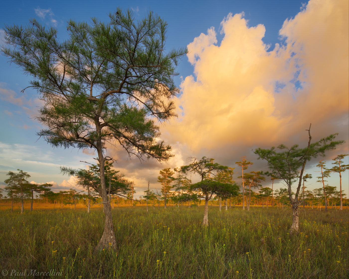 Clouds catch the last light of the day in Big Cypress.